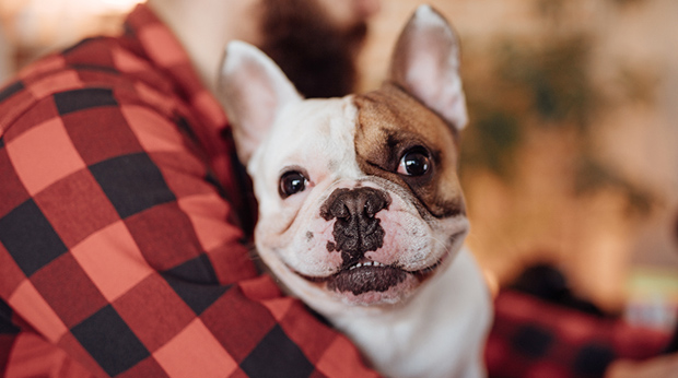 Does Your Dog Want Love And Affection… Or Just Food?