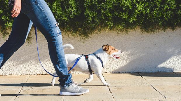 Perfect Dog-Walking Times!