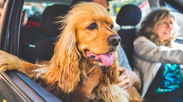 Driving With Your Pets