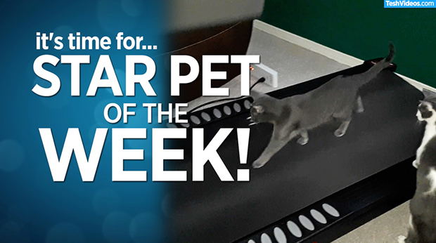 Star Pet Of The Week – May 31, 2019