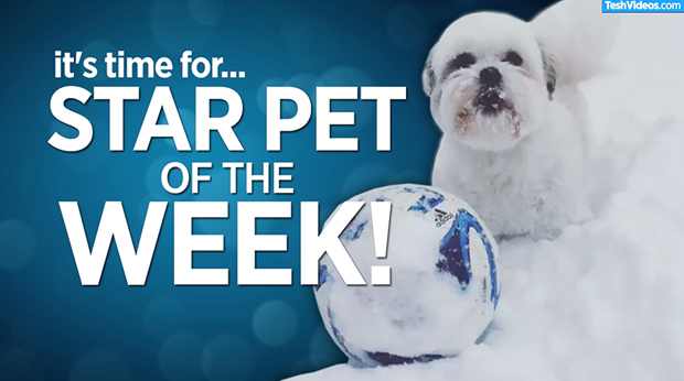Star Pet Of The Week – March 15, 2019