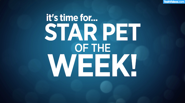 Star Pet Of The Week – August 17, 2018