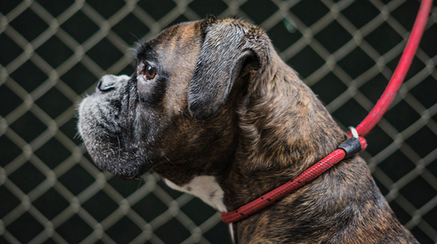 Which Dogs Are Being Abandoned?
