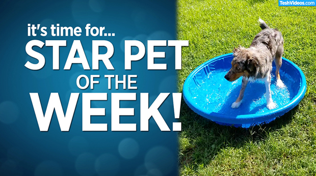 Star Pet Of The Week – July 26, 2019