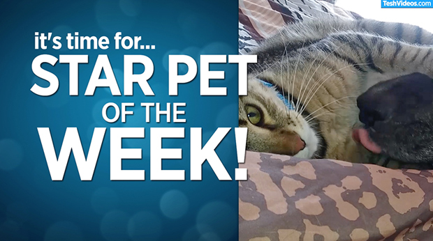 Star Pet Of The Week – October 25, 2019