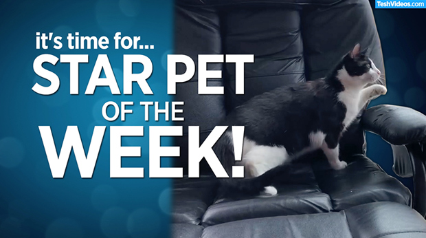 Star Pet Of The Week – May 17, 2019