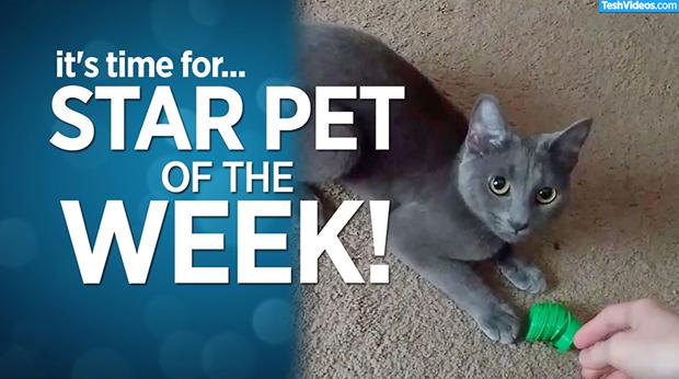 Star Pet Of The Week – November 29, 2019