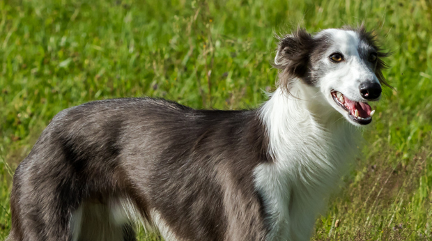 Which Dogs Live Longest?
