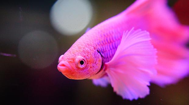 Do Fish Get Depressed?