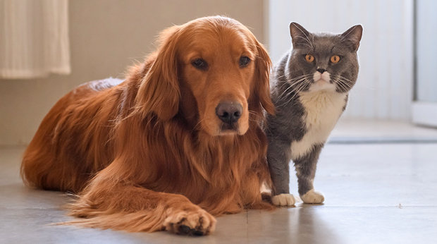 True Cost Of Pets?
