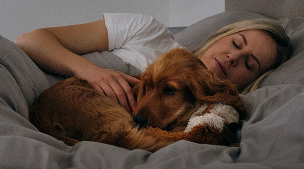 Sleep Therapy Dogs!