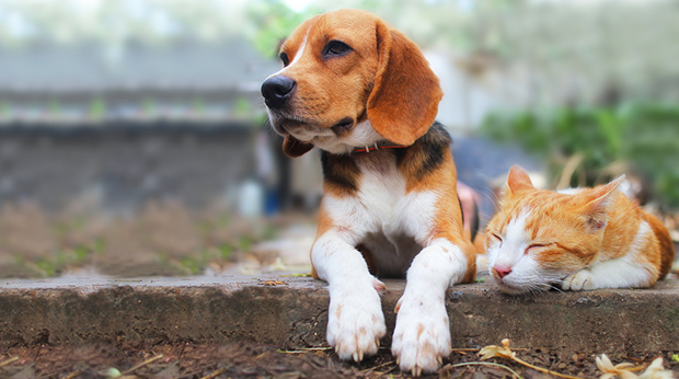 Who's Better At Finding Food: Dogs Or Cats?
