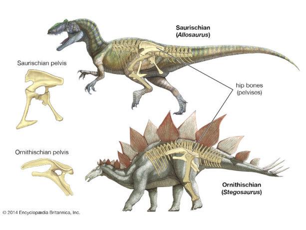 dinosaur quiz