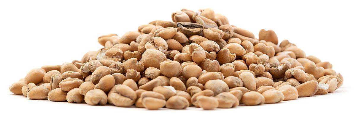 Torrified-Wheat