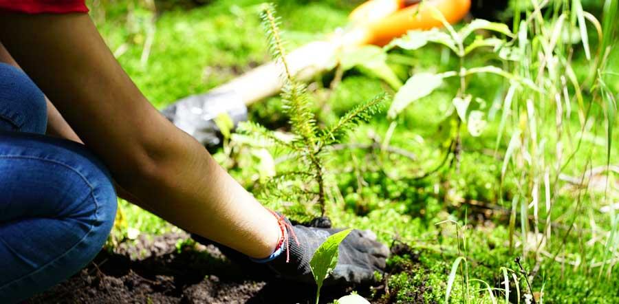 Persona plantando un árbol