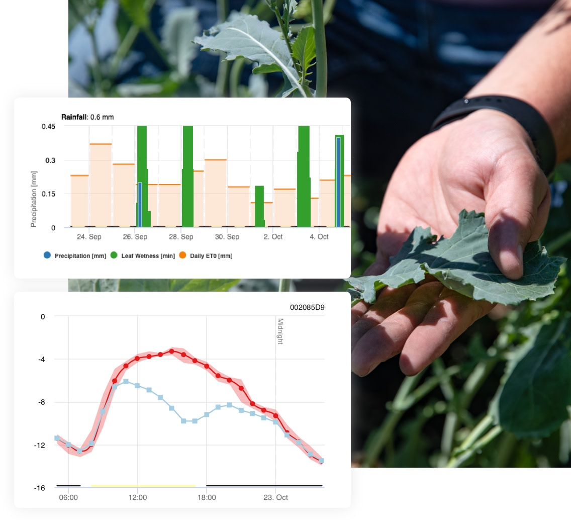Kale inspection with weather chart