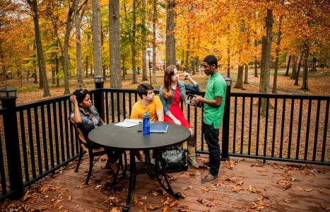 Study among the trees in The Forest at Drew University