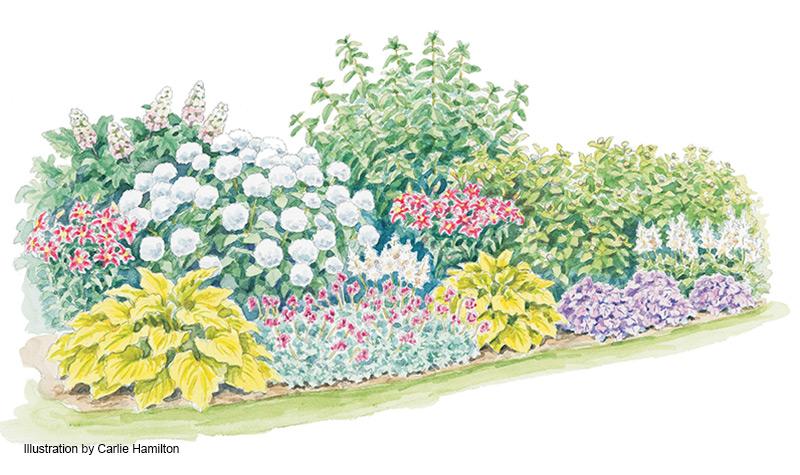Four-Season Hydrangea Border | Garden Gate