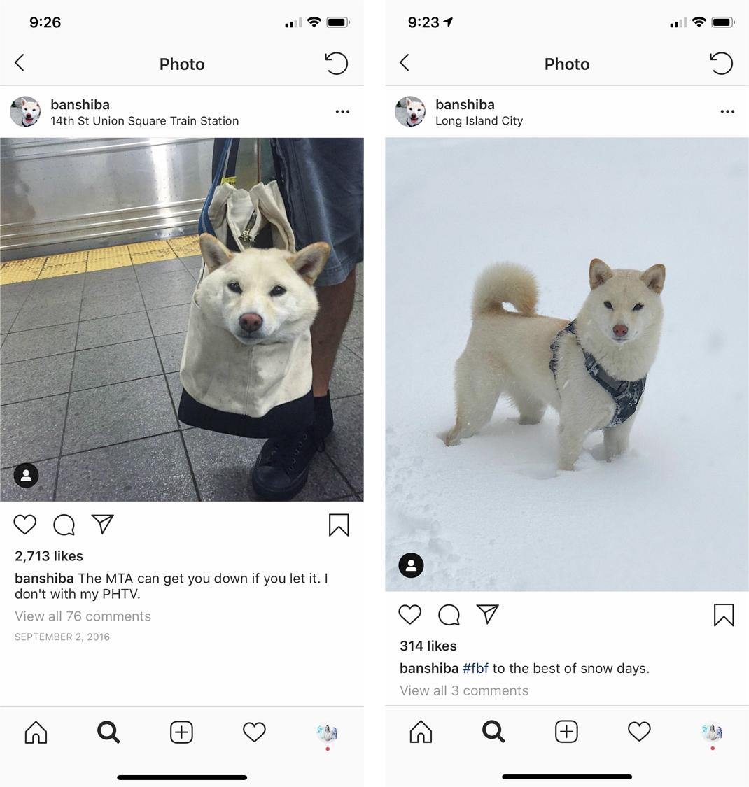 banshiba-instagram