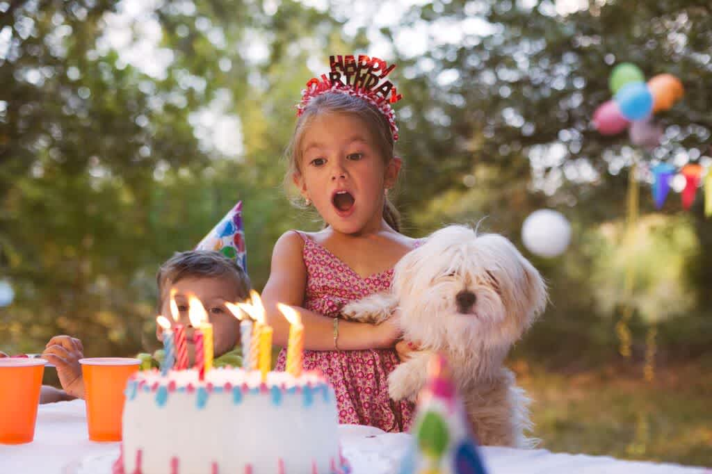 Our Top 7 Songs for Birthday Videos - Animoto