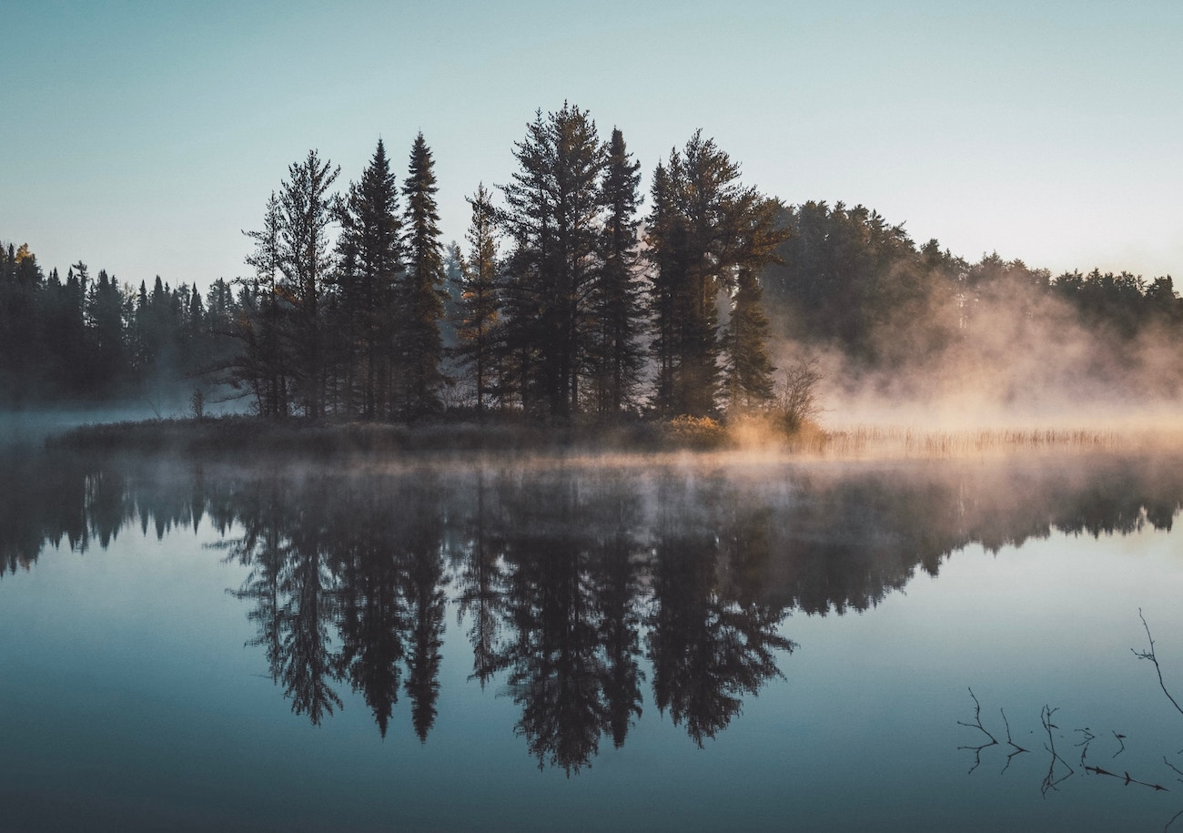 foggy-lake-tree-reflection