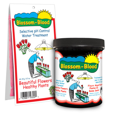 blossom blood main web