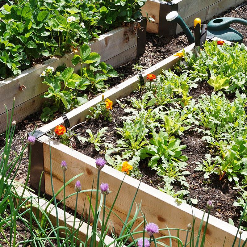 odla grönsaker i pallkrage