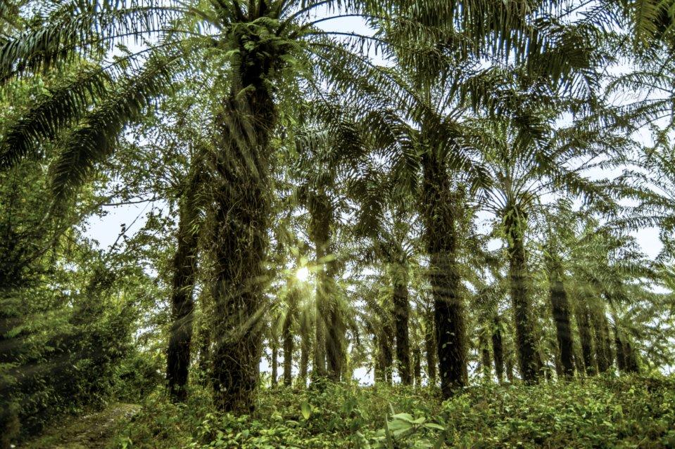 bad palm farm