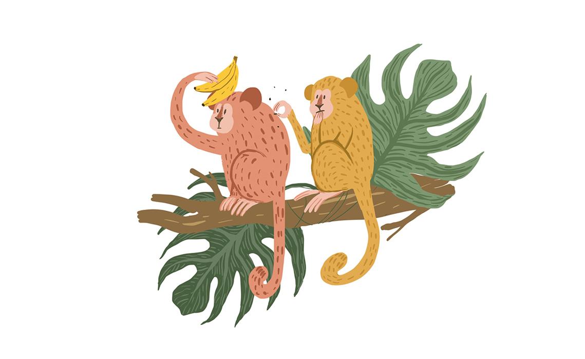 monkeys jungle