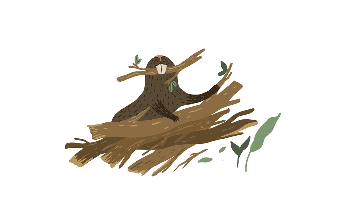 beaver jungle