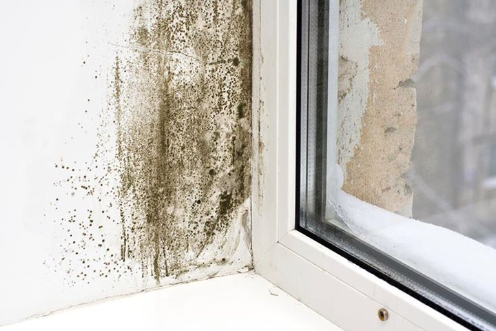 Mould, mildew and musty smells - a real health problem