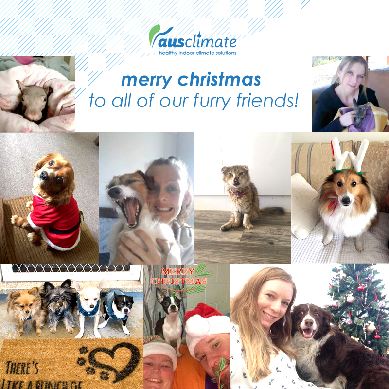 Ausclimate Christmas Pet Photos