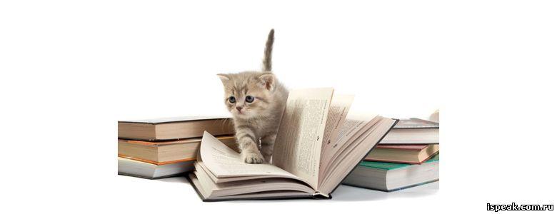 Котенок и книжки