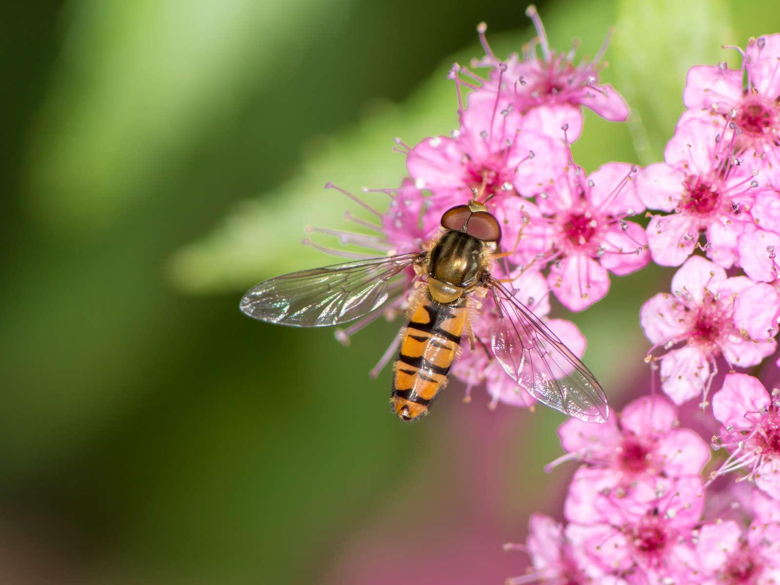 Kukkakärpäsistä Eroon