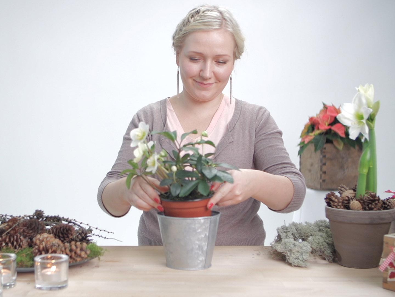 Miten Orkidean Saa Kukkimaan