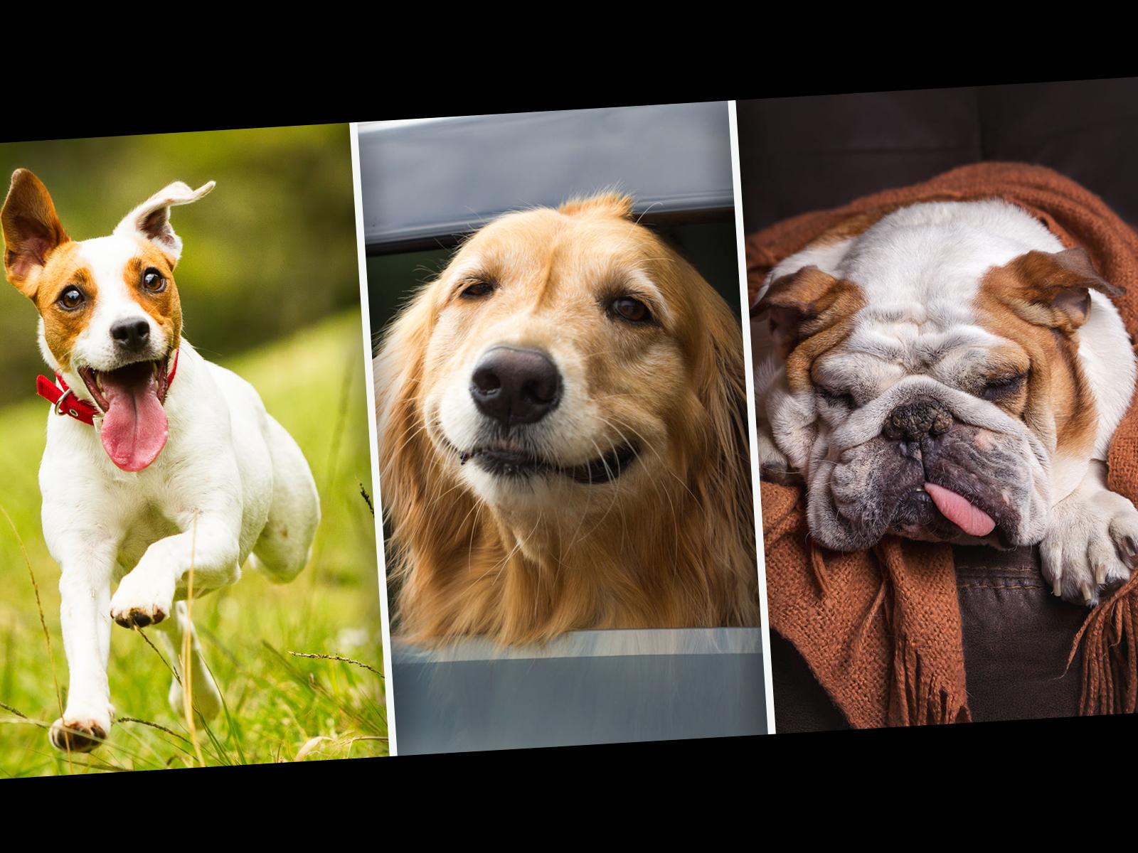 MyDogDNA kartoittaa koirasi terveysperimän