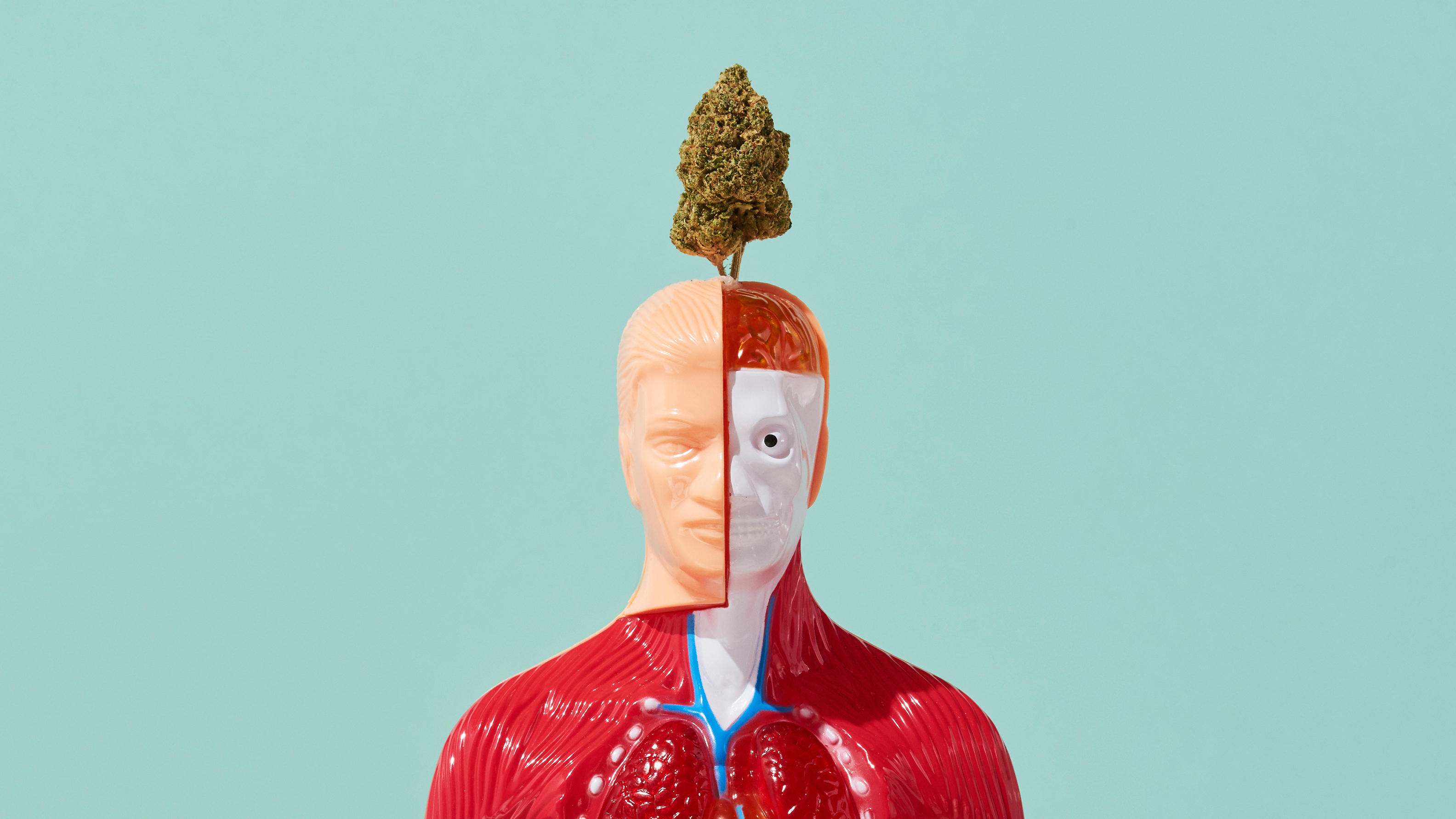 Here's How Cannabis Works Inside The Human Body
