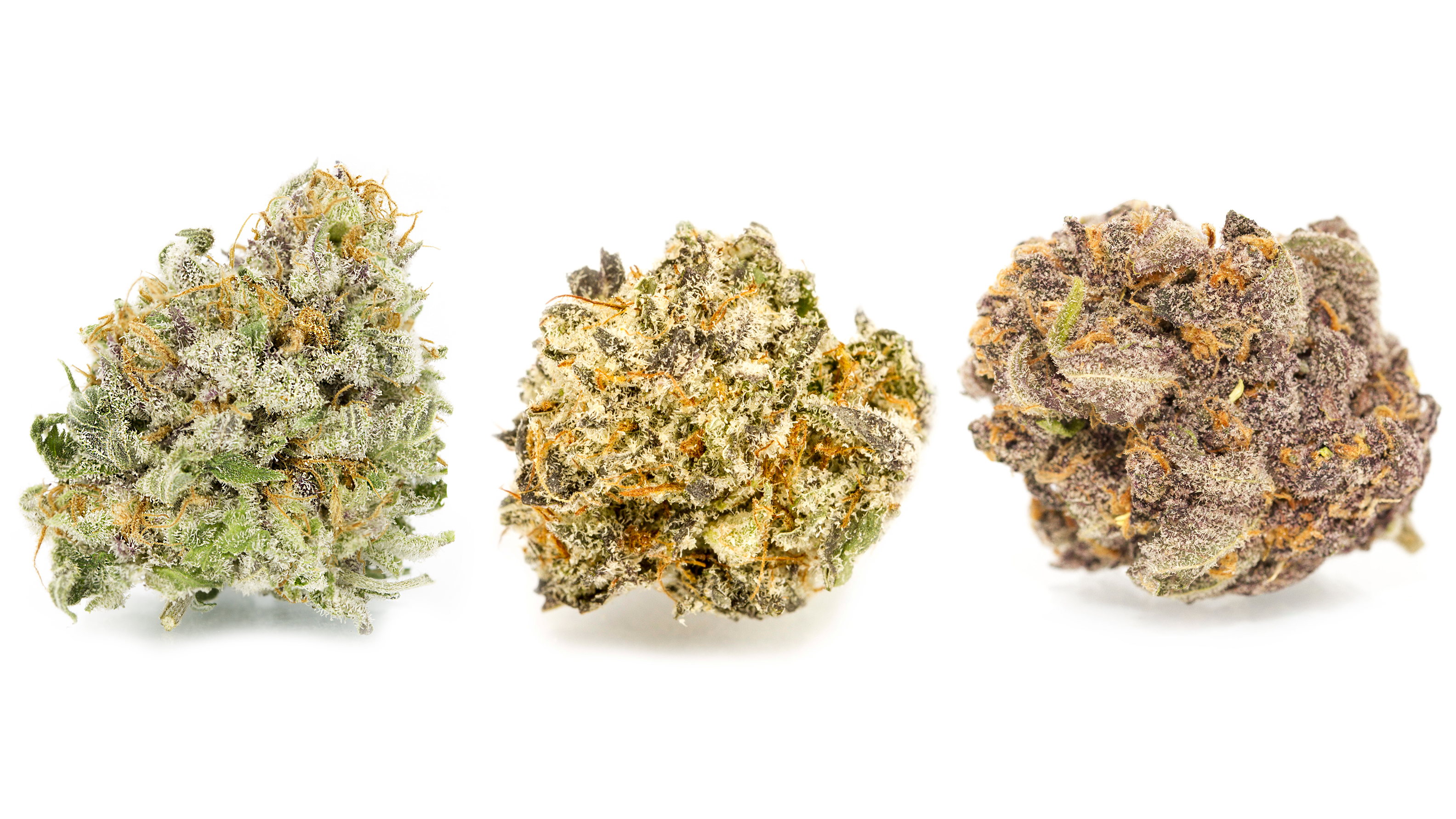 Strain spotlight: Granddaddy Purple
