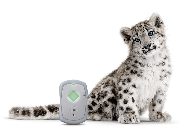 LivingWell Companion Go device next to a snow leopard critter