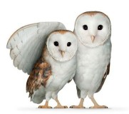 Two TELUS WISE owls