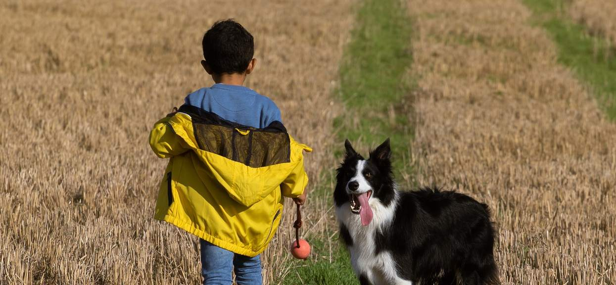 dzieci: polecane rasy psów