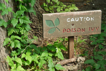 Poison ivy warning image for navigation feature in everyday care