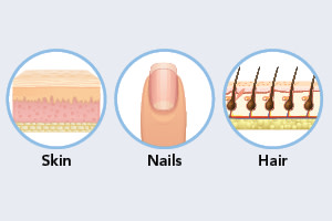 illustration of skin, hair and nails for the