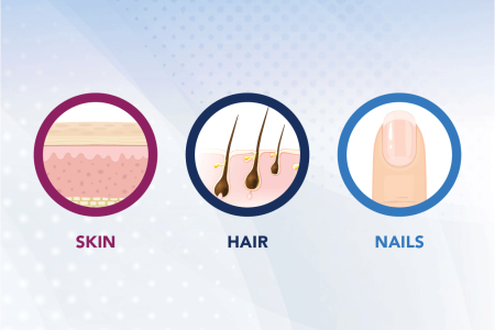 Illustration of skin, hair, and nails