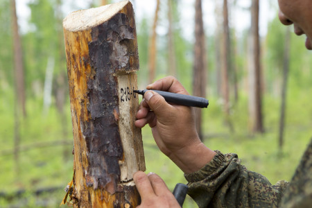 outdoor worker marking a tree