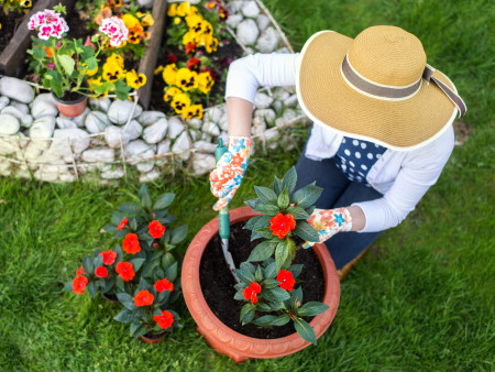 Woman planting flowers in garden pot
