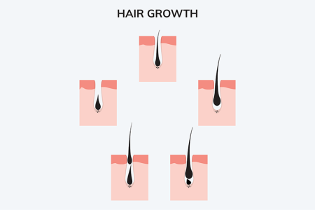 illustration of cycle of hair growth