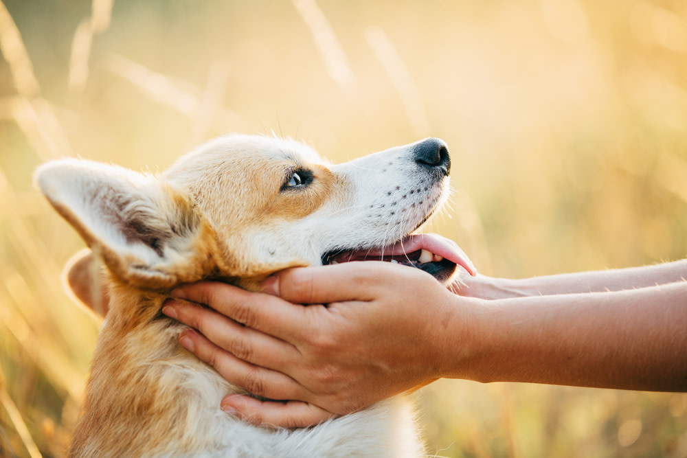 what you need to know about cbd side effects in dogs