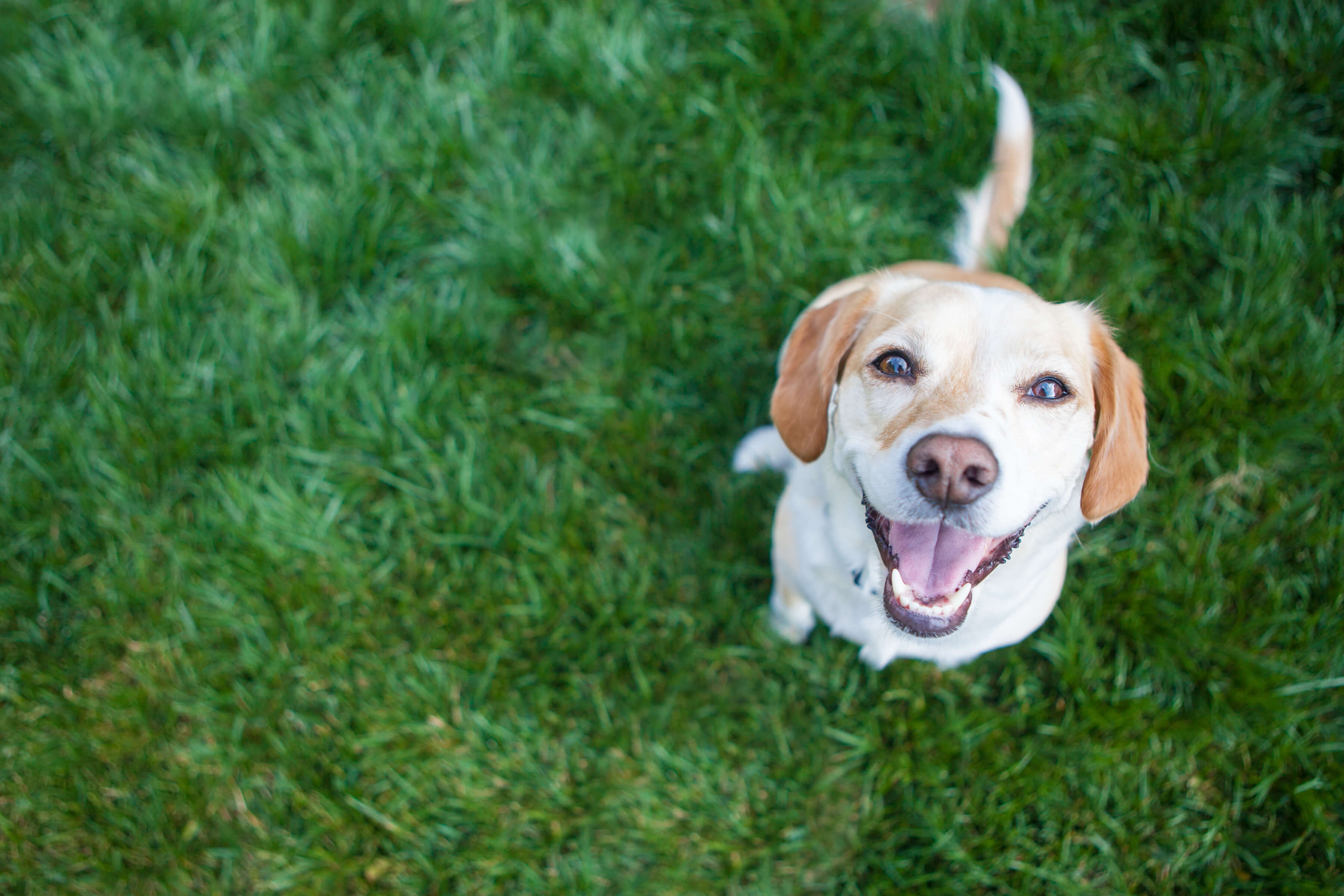 Ashwagandha for Dogs: a powerful herb that can promote relaxation in dogs.