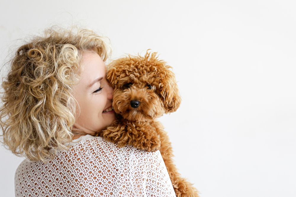 finding the right cbd oil for your dog